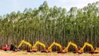 MS vê setor florestal impulsionar economia verde no Estado