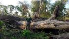 Senado aprova projeto que estipula fim do desmatamento ilegal