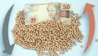 Câmbio e Chicago estagnam negócios com a soja no Brasil