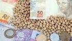 Preços da soja caem em todas as praças pesquisadas