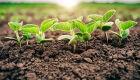 Pesquisadora da Embrapa dá dicas para plantio de qualidade de soja