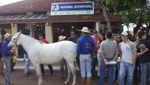 Aberta Semana do Cavalo Pantaneiro na 1ª Expo MS