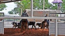 Ranch Shorting na Acrissul