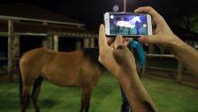 Lançamento do aplicativo Resenha Virtual de Equídeos - Fotos: Edemir Rodrigues