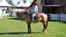 6ª Exposição Morfológica Passaporte de Cavalo Crioulo em Campo Grande