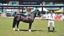 Premiação da 6ª Exposição Morfológica Passaporte de Cavalo Crioulo em Campo Grande