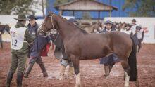 Cavalo Crioulo: Prova de Morfologia dia 4 de julho
