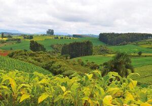 Com tecnologia e inovação, produção agropecuária dobrou no Brasil em 22 anos
