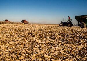Colheita do milho está praticamente concluída e confirma produção de 6 milhões de toneladas