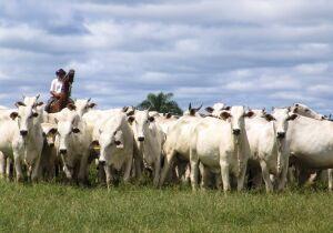Soja, milho e carne bovina puxam valor da produção agropecuária, que supera R$ 1,1 trilhão