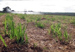 Estudos indicam estratégias para mitigar emissão de óxido nitroso na cana