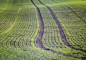 Área de soja no Brasil já é quatro vezes maior do que Portugal