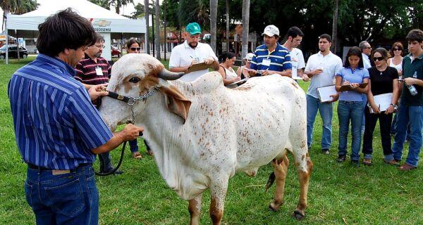 Curso de Avaliação de Vacas Leiteiras realiza hoje (11) aula prática na Expo MS