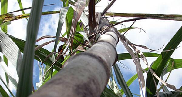 Workshop sobre Bioenergia de Mato Grosso do Sul começa dia 22, em Dourados