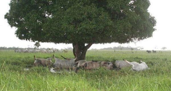 Raio mata oito vacas em fazenda de Coxim
