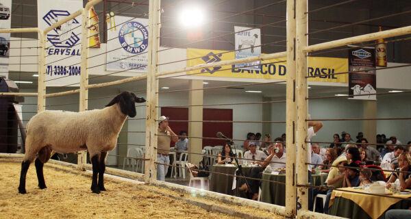 8º Leilão Master Ovinos difunde a ovinocultura na Expogrande 2010