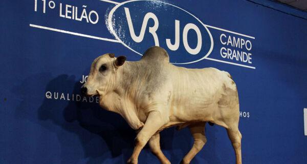 11º Leilão VRJO supera expectativa e vende touros nelore acima de R$ 10 mil