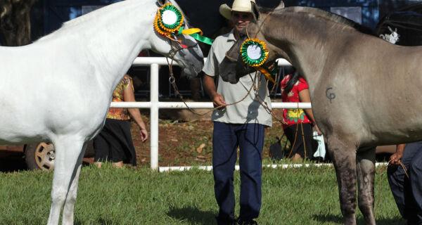Associação premia os grandes campeões do Cavalo Pantaneiro