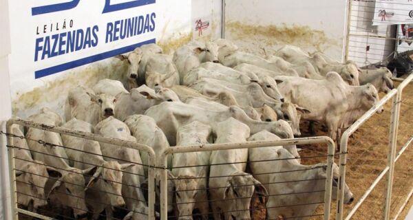 Leilão Fazendas Reunidas comercializa quase 900 animais