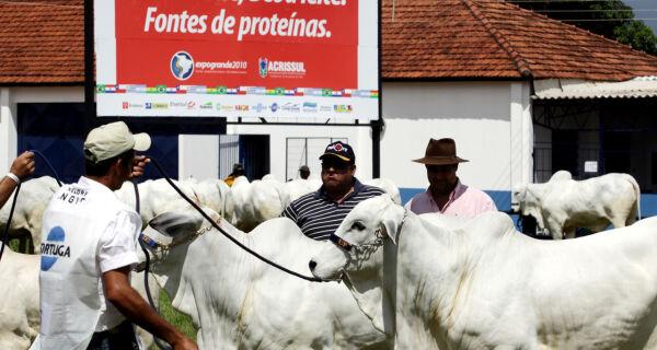 Indicados para corte, Nelores Mocho são julgados na Expogrande 2010