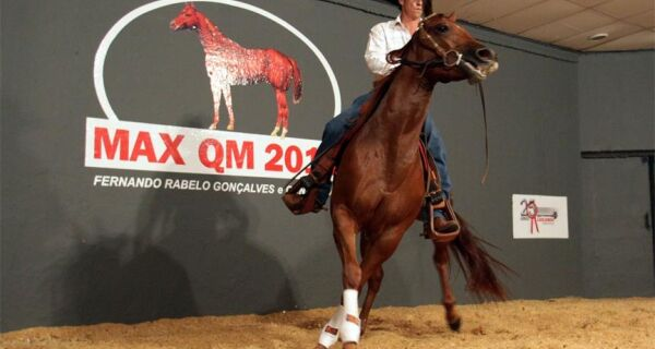 Leilão Max QM 2010 comercializa égua quarto de milha por R$ 98,4 mil