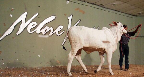 Leilão Nelore Vip MS 2010 reúne prenhezes e animais dos grandes criatórios do Estado