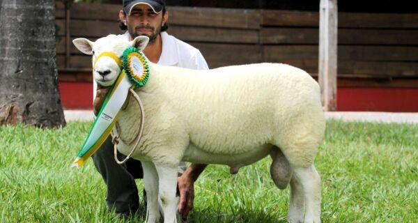 """""""Criação de ovinos tem crescido no Mato Grosso do Sul"""", diz especialista"""