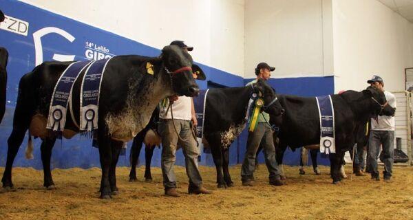Força da pecuária leiteira se evidencia no 14º Leilão Girolando Fazendão & Convidados