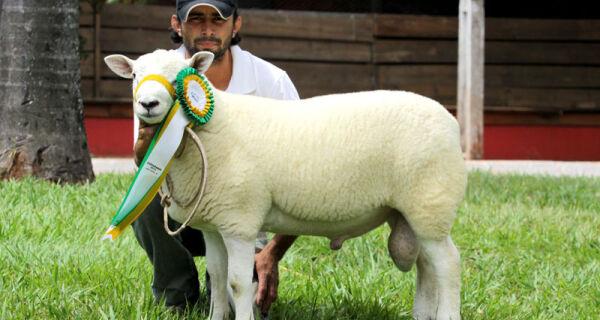 Asmaco divulga o resultado do julgamento dos ovinos