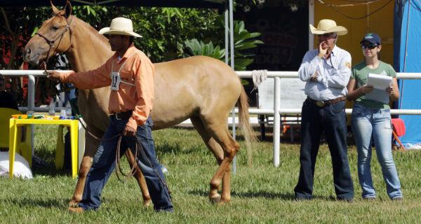 Cavalos Pantaneiros são julgados hoje na Expogrande