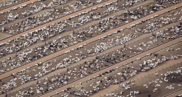Mega leilão em Mato Grosso terá 28 mil animais no recinto, Dilma é esperada