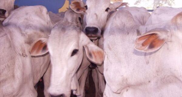 BB analisa regras de crédito para impulsionar Bolsa de Carnes