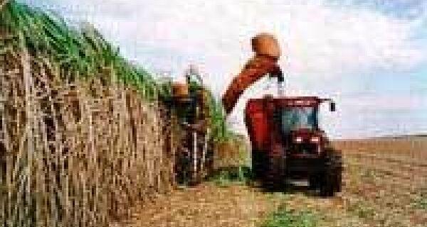 Seca faz produtividade da cana-de-açúcar cair em agosto