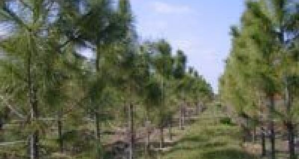 O Brasil produz papel sustentável