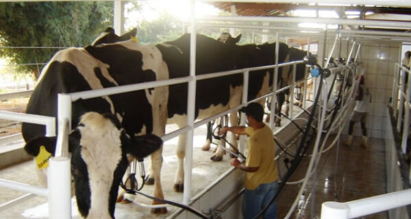 Custos de produção de leite têm alta em setembro
