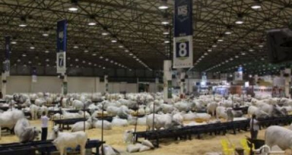 Maior feira de Nelore do mundo, em Campo Grande, já tem 800 inscritos