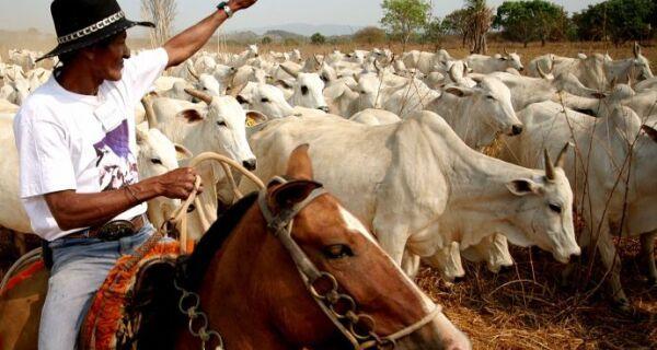 Escassez de bovinos e preço em alta favorece pecuária
