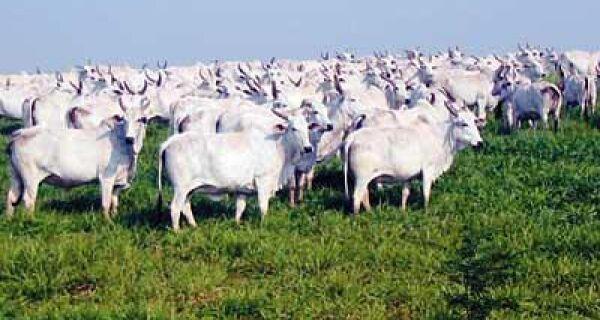 Falta de gado pode tirar mercado do Brasil no exterior