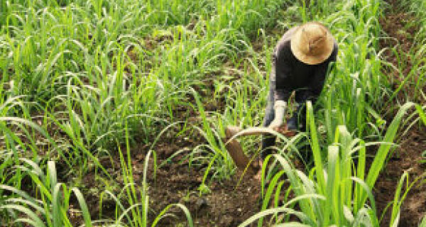 Expansão agropecuária faz Brasil crescer para o interior