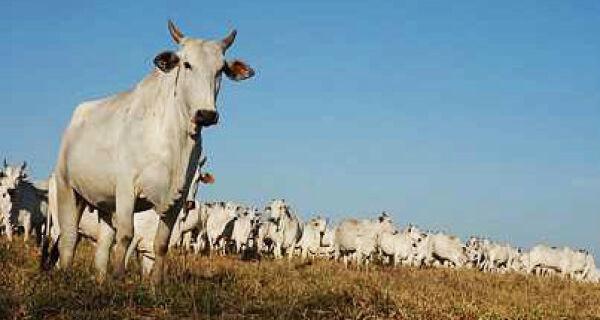 FCO investe mais de 44% dos recursos em melhoria genética dos gado