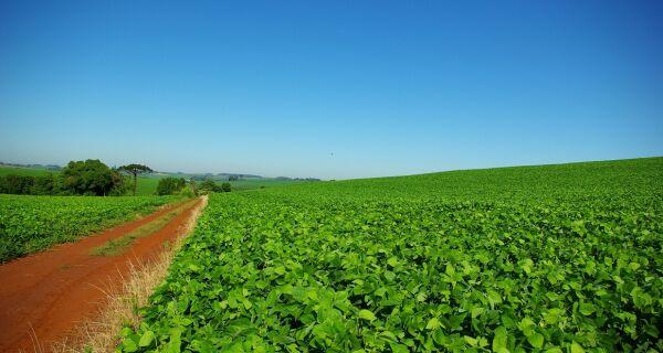 Safra de soja em MS deve atingir 5,6 mil toneladas