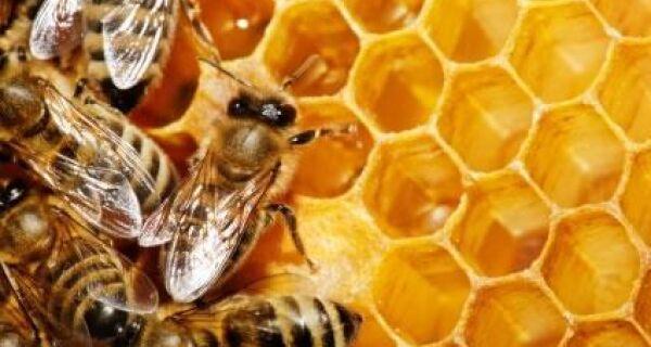 Exportação de mel cresce 38% em fevereiro