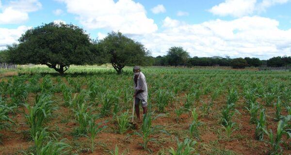 No sertão,  agricultores estão satisfeitos com as lavouras