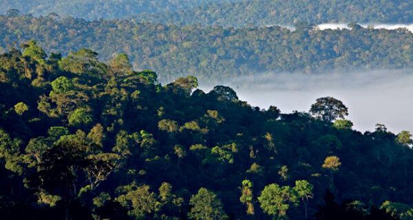 Votação do Código Florestal pode ficar para junho