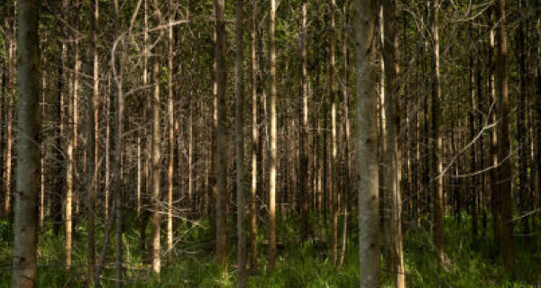 Cultivo de floresta poderá ser considerado atividade agrícola