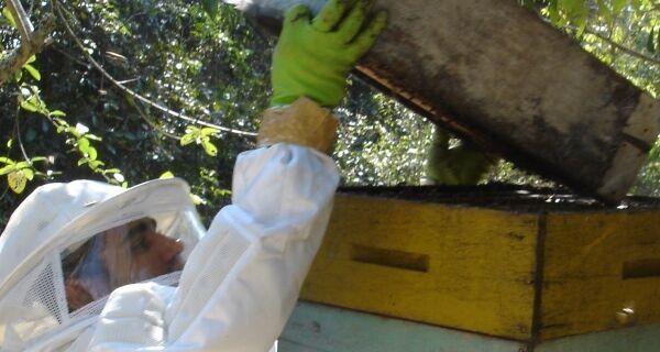 Dourados vai produzir 60 toneladas de mel