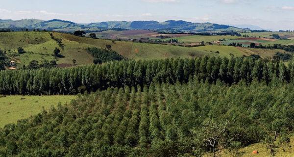 Código Florestal: O que muda na lei?
