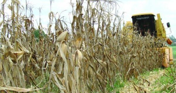 Chuvas atrasam final da colheita de milho na Argentina