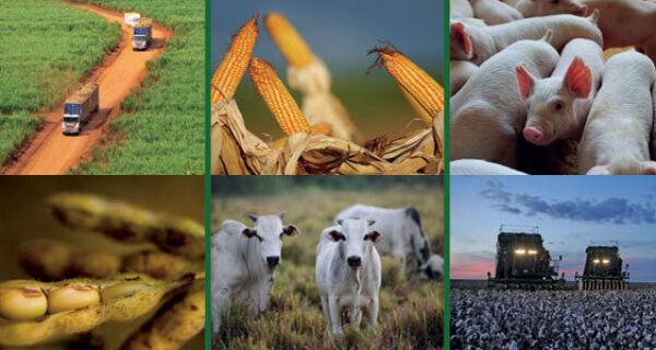 CNA apresenta perspectivas para a agropecuária do Centro-Oeste