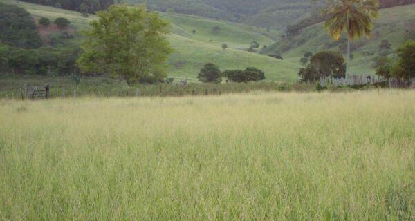Encontro em Mato Grosso do Sul discute sementes forrageiras